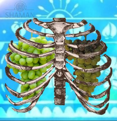 שיקום ריאות. LUNGS